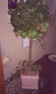 $50, Designer Topiary Set