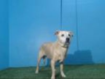 Adopt MAX a Parson Russell Terrier, Mixed Breed