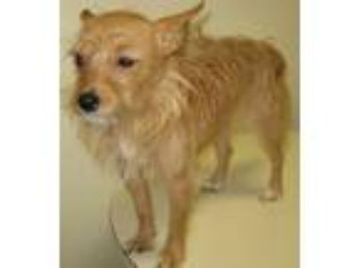 Adopt Dickens a Terrier