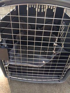 """Petmate Sky Kennel 32"""" L x 22.5"""" W x 24""""H with Pad"""