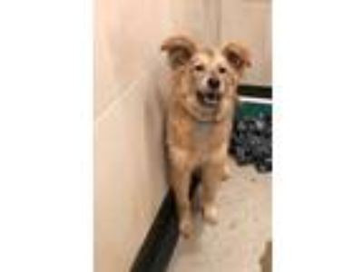 Adopt MYSTIC a Shepherd (Unknown Type) / Mixed dog in Redwood City