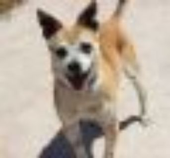 Tony Terrier Dog