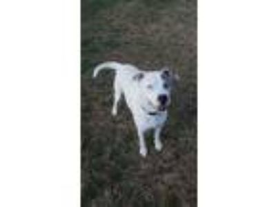 Adopt Indi a Terrier, Mixed Breed