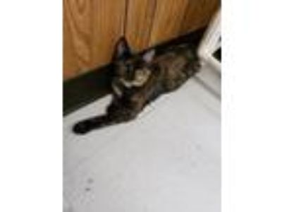 Adopt Cat 17887 a Tortoiseshell Domestic Shorthair cat in Parlier, CA (24858006)