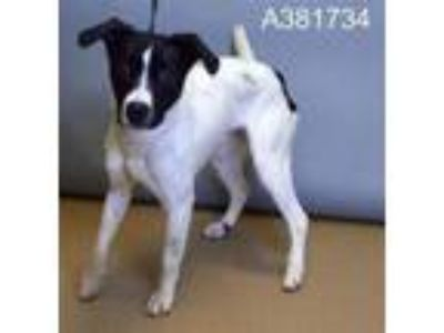 Adopt CYRUS a Border Collie, Mixed Breed