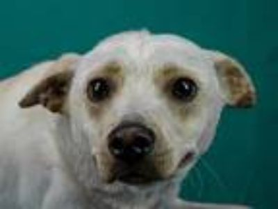 Adopt Waffle a Terrier (Unknown Type, Medium) / Mixed dog in LAFAYETTE