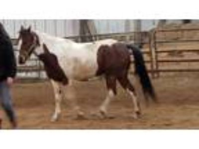 Craigslist Horses For Sale Classified Ads In Danville Illinois