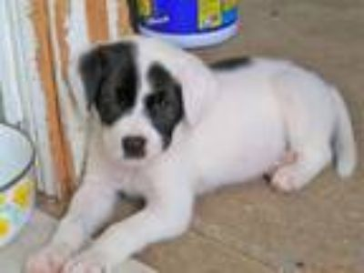 Adopt Rocky a Mixed Breed