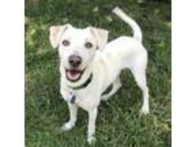 Adopt Ruston - Adopted! a Whippet