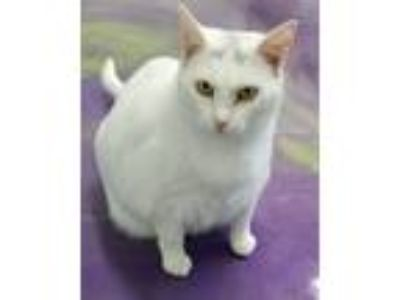 Adopt PRECIOUS a White (Mostly) Domestic Shorthair (short coat) cat in Anna
