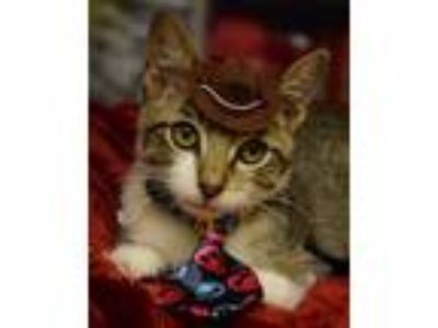 Kittens - Timberlane Acres Classifieds - Claz org