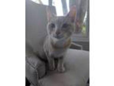 Adopt Myles a Orange or Red Domestic Shorthair cat in Grandville, MI (25338841)
