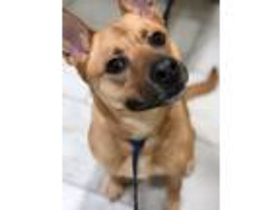 Adopt Beth Happy Little Girl and Very Engaging Puppy a Tan/Yellow/Fawn