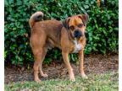 Adopt Peanut (real Name) a Mixed Breed (Small) / Mixed dog in Lake Jackson