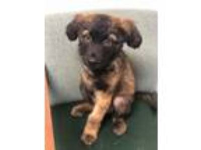 Adopt Griffin a Mixed Breed