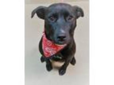 Adopt Emma a Retriever, Mixed Breed
