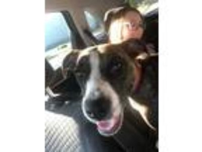Adopt Chloe - local gal a Boxer