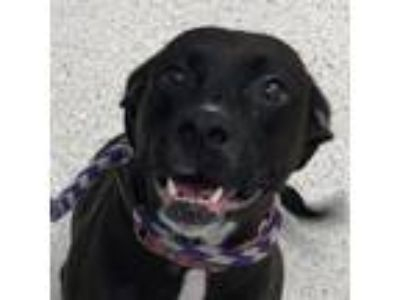 Adopt Philly a Black Mixed Breed (Medium) dog in Jacksonville, FL (25640313)