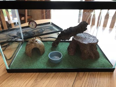 Gecko or small reptile habitat and extras