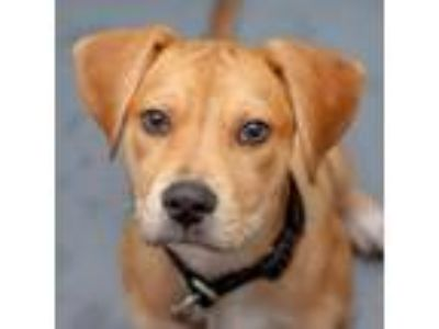 Adopt Lucky Charm a Tan/Yellow/Fawn Mixed Breed (Medium) dog in New York City