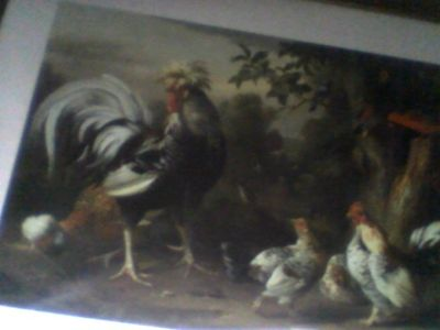 poultry & other birds
