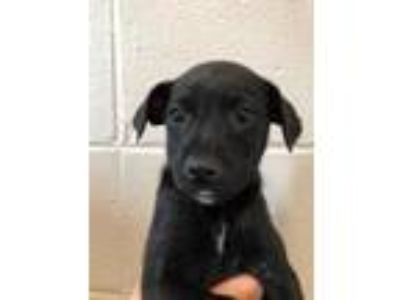Adopt Buddy a Black Jack Russell Terrier / Mixed dog in Cumming, GA (25461079)