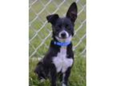 Adopt Arya a Mixed Breed