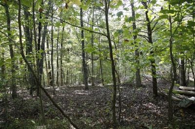 wooded 0.7 +/- acres on the Cumberland Plateau