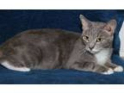 Craigslist Animals And Pets For Adoption Classifieds In St Marys