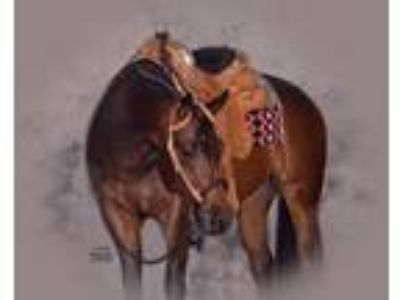 Beautiful bay mare by RL Best of Sudden outstanding western allarounder