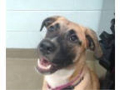 Adopt LILLY a Shepherd