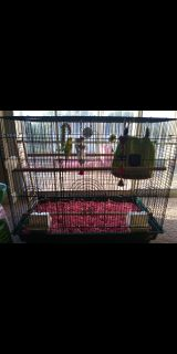 2 Parakeets w/ Bird Cage & supplies