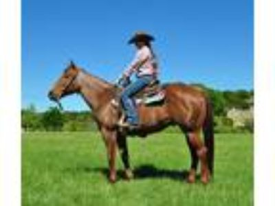 VIDEOExtremely Athletic 7 Yr Old Red Roan Mare