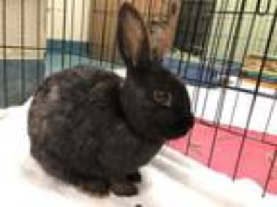 Adopt Logan a Bunny Rabbit