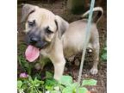 Adopt Slinky Dog a Shepherd, Terrier