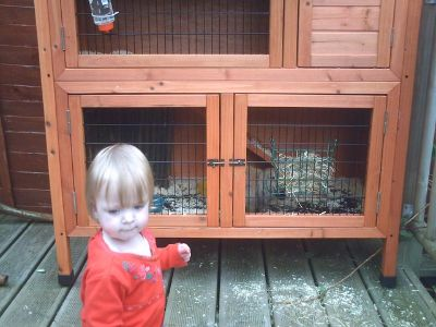 Large 2 story rabbit cage