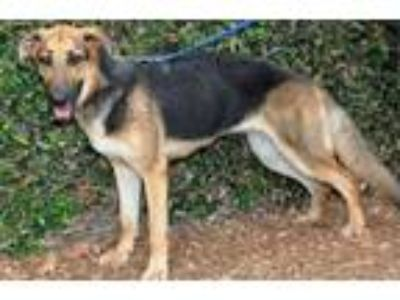 Adopt Ella a German Shepherd Dog