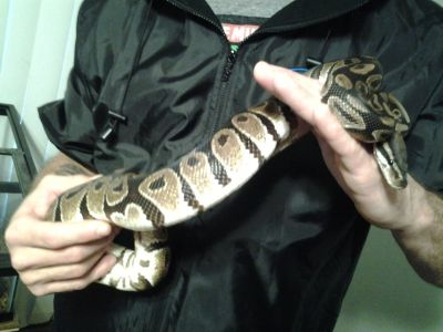 snake with reptile enclosure tank