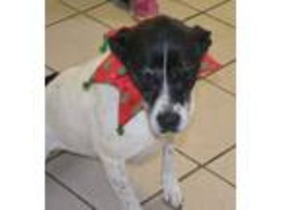 Adopt Tina a Pointer