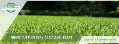 Are you looking for Grass Cutting Service Dallas, Texas area?