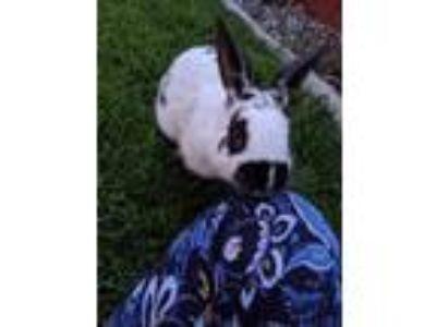Craigslist For Sale Classifieds In Kennewick Washington Claz Org