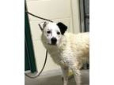 Adopt Jeff a Mixed Breed