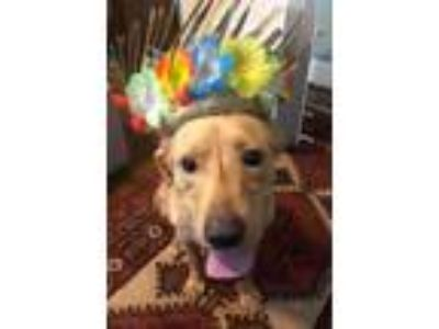 Adopt Morehouse Parish a Labrador Retriever