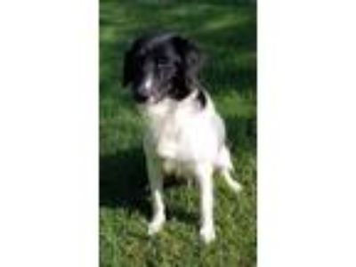 Adopt Daisy Lou a Mixed Breed (Medium) / Border Collie / Mixed dog in Little