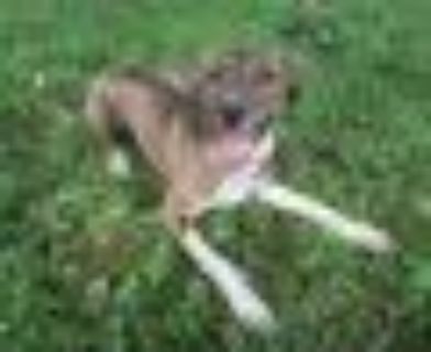 Meisha Mae Catahoula Leopard Dog Dog