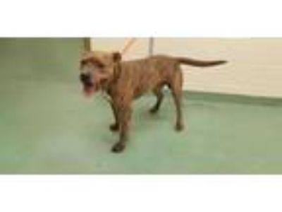 Adopt BYERS a Mixed Breed
