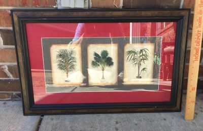 Matted palm tree picture