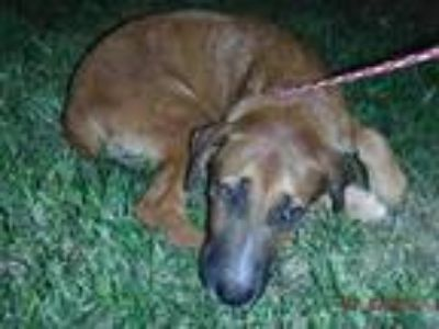 Adopt CHASE a German Shepherd Dog, Mixed Breed