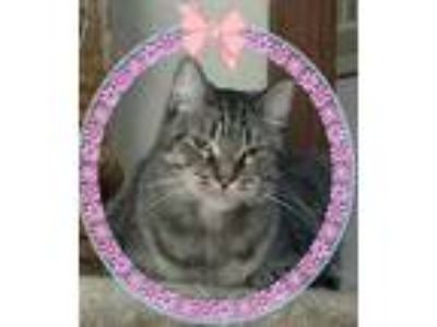 Adopt Helen a Brown Tabby Domestic Shorthair (short coat) cat in Bowie