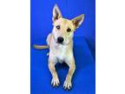 Adopt (found) Keller a Tan/Yellow/Fawn Terrier (Unknown Type